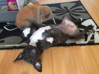 any a králík